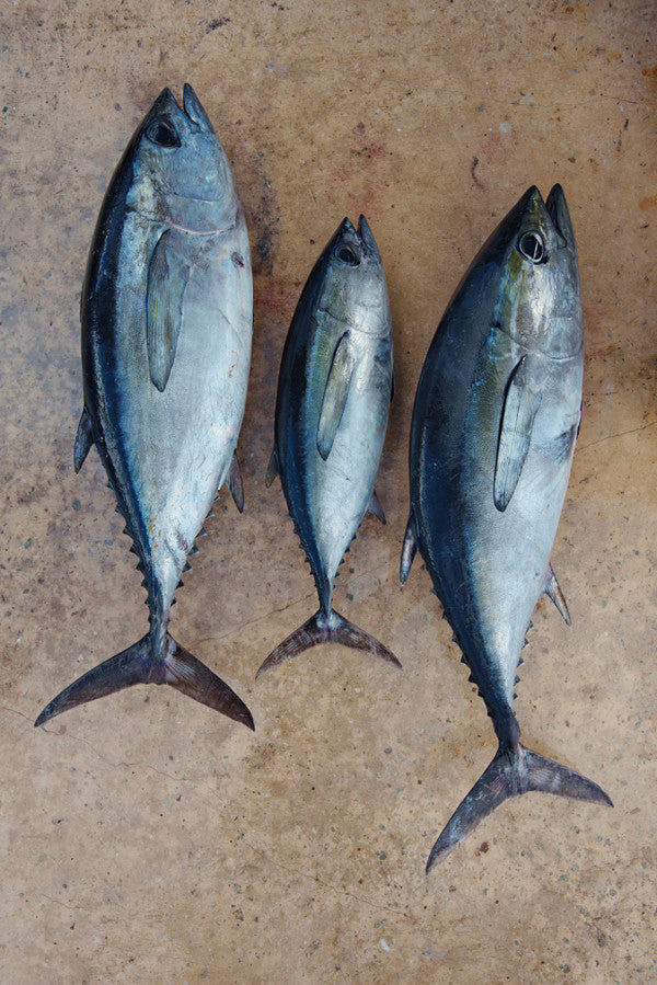 Trio of Tuna