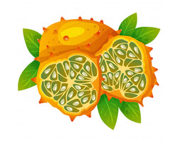 Kalahari Melon Seed Oil - an Oasis for the Skin