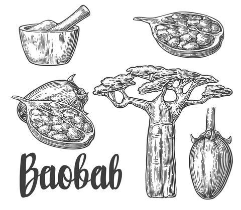Natural Skincare Ingredient from the Tree of Life - Baobab oil