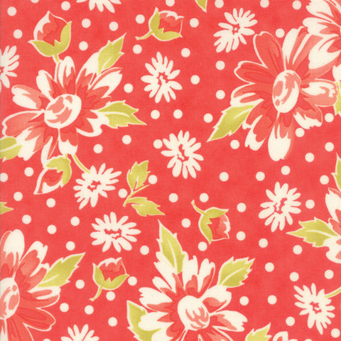 Daisy Blooms, Candy Apple Red