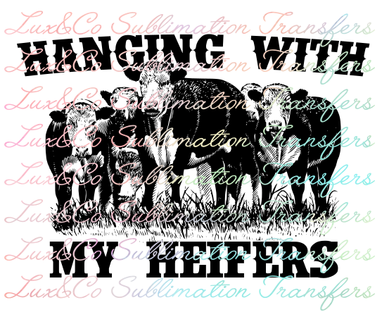 Hanging with my Heifers Sublimation Transfer