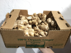 Organic & Fair Trade Ginger from Peru