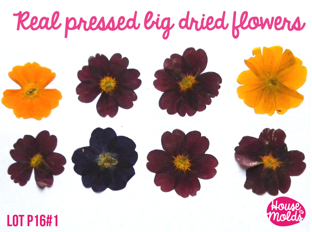 "Real Dryed pressed Flower-set of 6 big size (approx 4 cm=1.6 ""),3 colours burgundry,purple and yellow,ideal for resin inclusions ,scrapbooking,home decoration art projects"