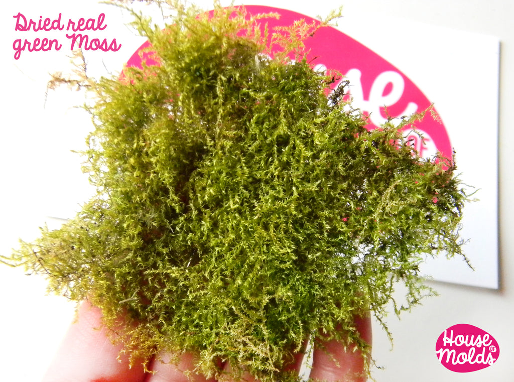 Dryed Natural Green Moss,ideal for any type of resin inclusions ,scrapbooking,home decoration art projects
