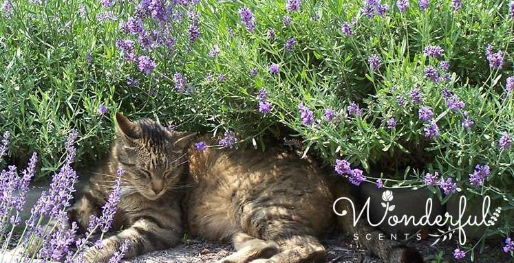 Happy #Caturday Everyone From Wonderful Scents!