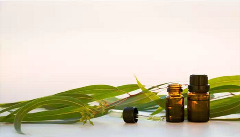 Natural Eucalyptus Essential Oil