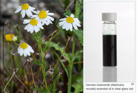 Wonderful Scents Blue German Chamomile Essential Oil