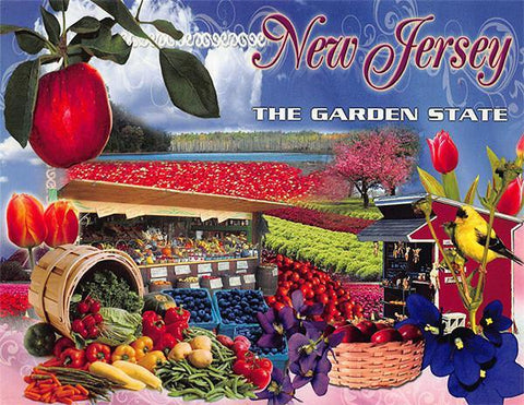 PCNJ002 Set 50 X Postcards 4X6 New Jersey Montage The Garden State