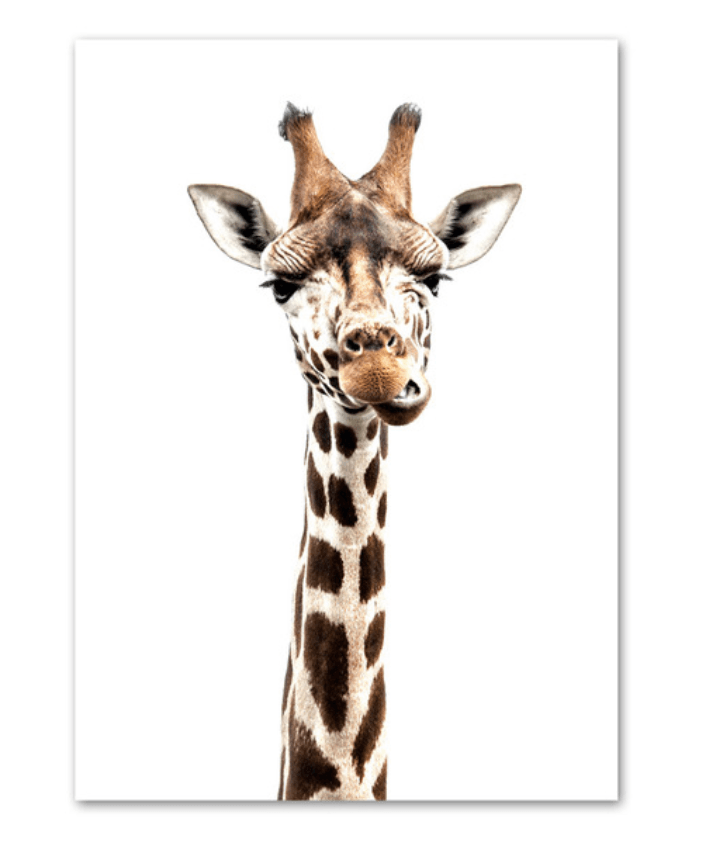Giraffe - Animal Collection