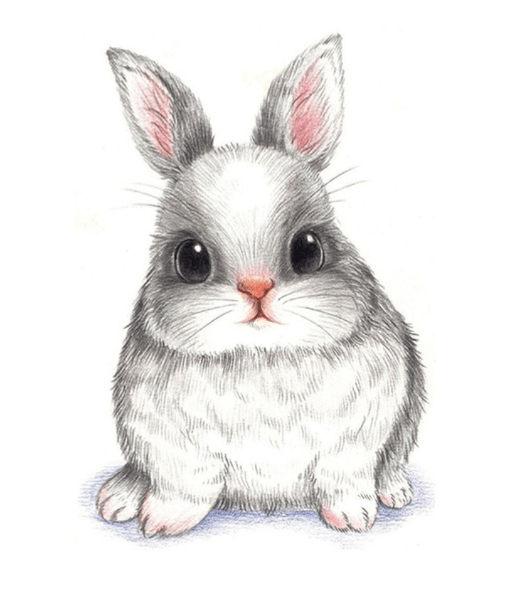 Cute Bunny - Animal Collection