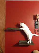 JTWoodworks cat shef, pet furniture, many colors available.  Cat perch made of solid wood