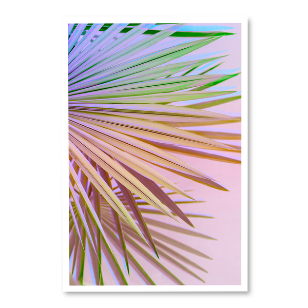 ~ cockatoo palms ~ N° 1