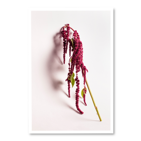 LOVE LIES BLEEDING 1