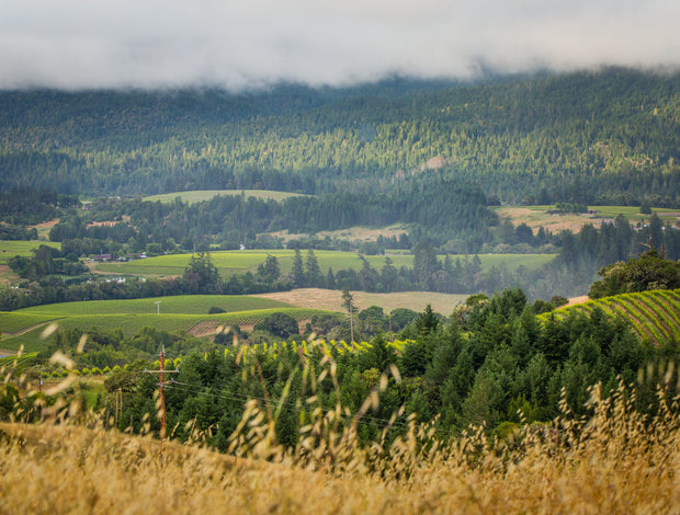 Your Guide to the Undiscovered Anderson Valley