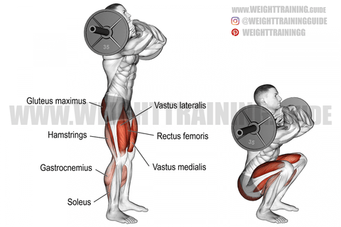 what muscles do front squats work