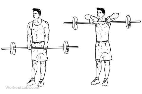 Push pull legs workout
