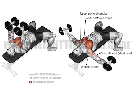 What are the best push exercises?