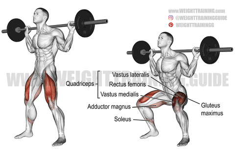 what muscles do back squats work
