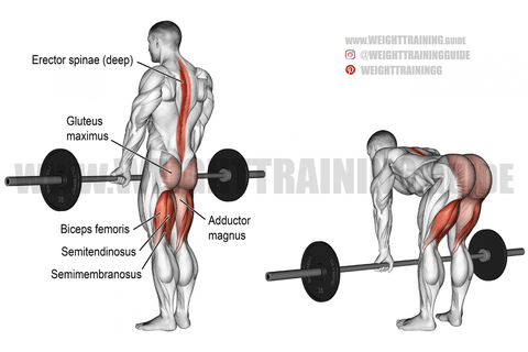 are deadlifts good for you
