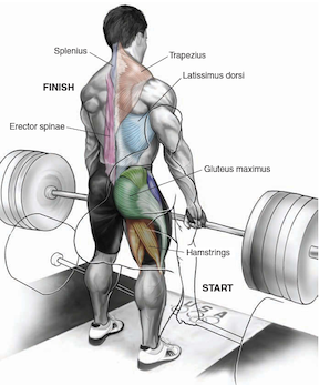 are deadlifts worth it