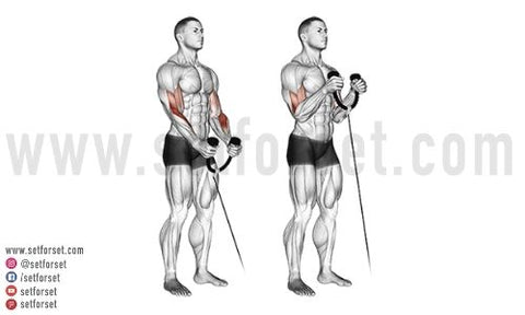 arms and back workout