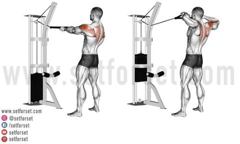 back and arm workout