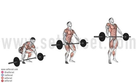 back and bi workout