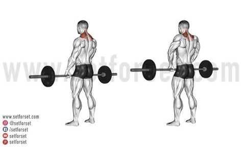 back and bicep workout for mass