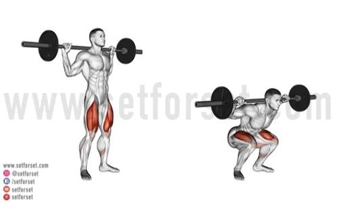 back squats muscles worked
