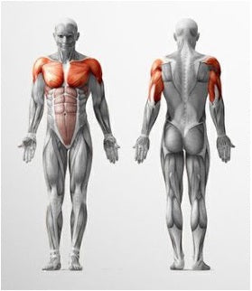 benefits of bodyweight chest exercises