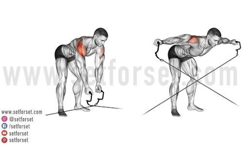 bent over cable reverse fly