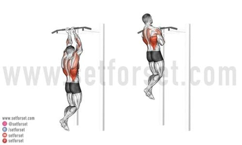 best back and bicep exercises