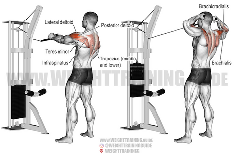 best cable back exercises
