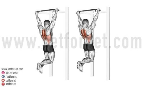 best exercises for back and bi workout