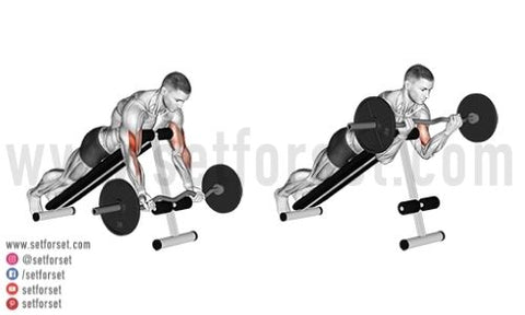 bicep exercises with ez bar