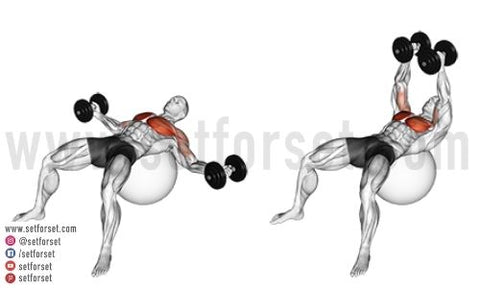 can you build your chest with dumbbells