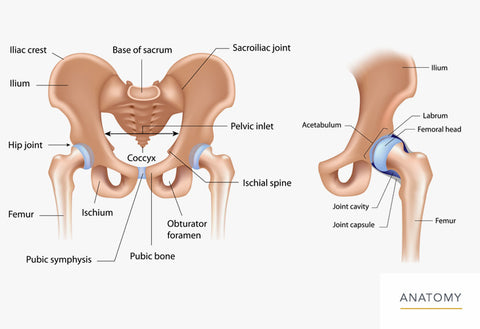 causes of hip pain when squatting