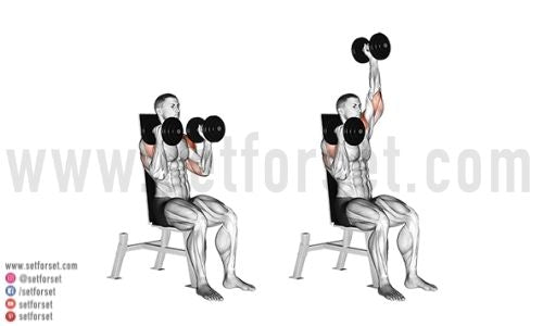 overhead press variations with dumbbells