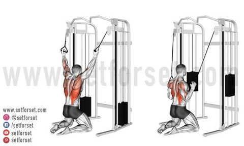 exercises for back