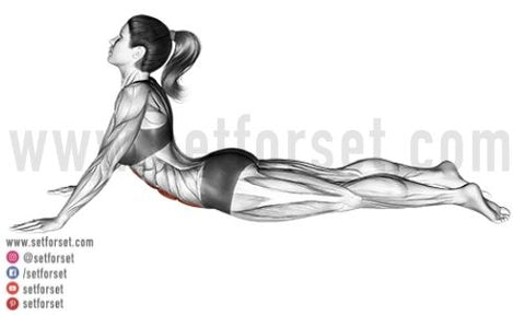 exercises for the transverse abdominis
