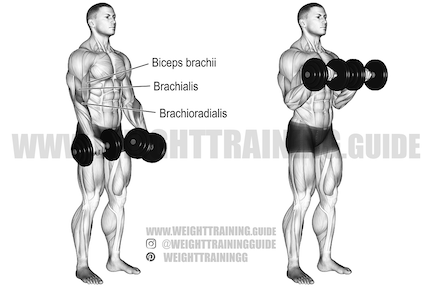 forearm exercises at gym