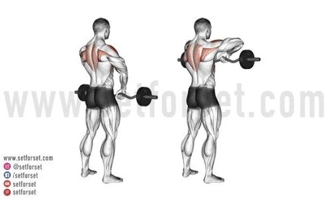 front delt upright rows