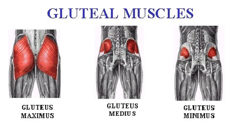 glute muscle activation