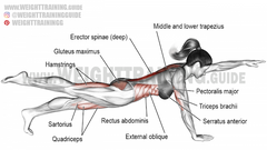 good exercises for the erector spinae