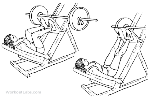 how to grow my glutes