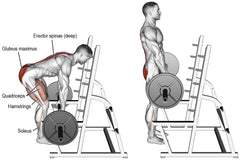 how to make erector spinae muscles stronger