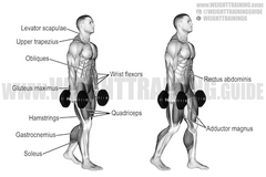 how to train upper trapezius muscle