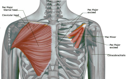 how to workout your chest with dumbbells