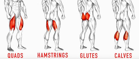 leg exercises muscles worked