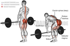 lower body pulling exercises